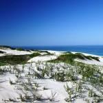 Dune a Koppie