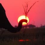chobe elefante sole tramonto