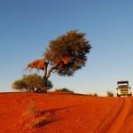 dune kalahari 1