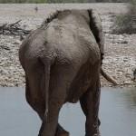 elefante etosha 1