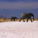 elefante etosha 2