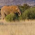 elefante palmwag