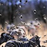 etosha uccellini