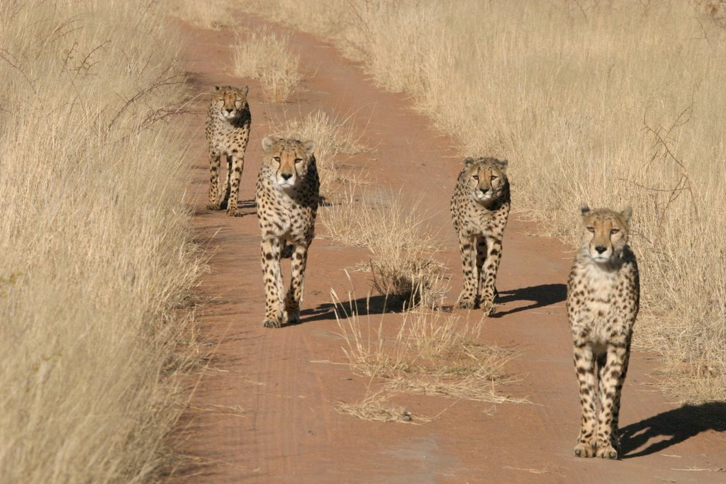 TWO WEEKS BETWEEN BOTSWANA AND NAMIBIA – African World Tour