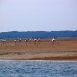inhaca portuguese island 7