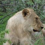 kruger leoni 3