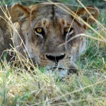 leone moremi botswana