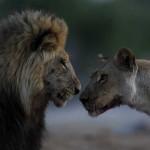 leoni chobe 2