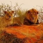 leoni kalahari 1