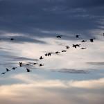 migrazioni victoria falls