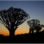 paesaggio namibia 6