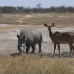 rinoceronte etosha 3