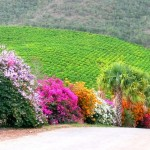strada sudafrica
