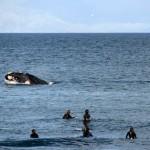 surf e balena