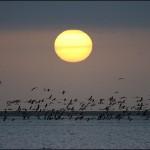 walvys bay fenicotteri tramonto